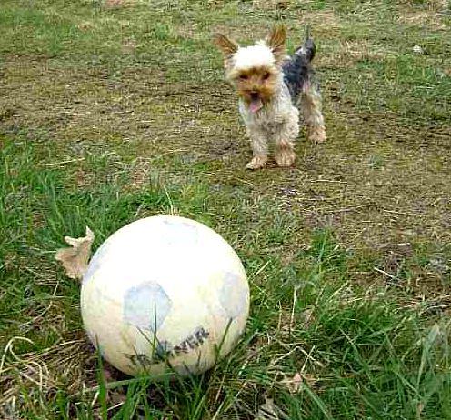 Hundespielzeug Intelligenz und Beschäftigung für den Hund