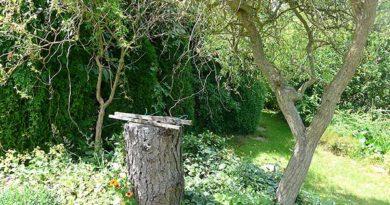 Sonnenschutz für den Garten