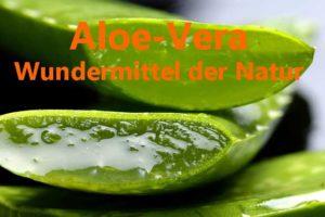Aloe-Vera 100% Gel und Saft aus Aloeblättern für die Gesundheit Bild