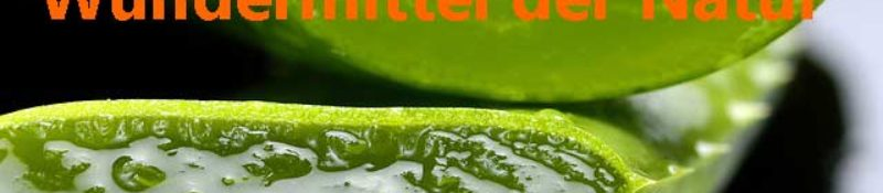 Aloe Vera 100% Kraft aus der Natur