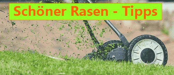 Schöner Rasen richtige Rasenpflege Gärtnertipps