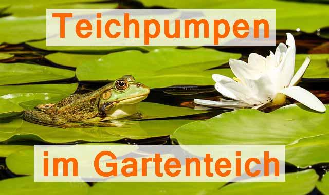 Teichpumpe für Gartenteiche Ideen Mini-Teich