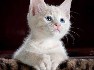 Katze anschaffen Tipps für das neue Haustier